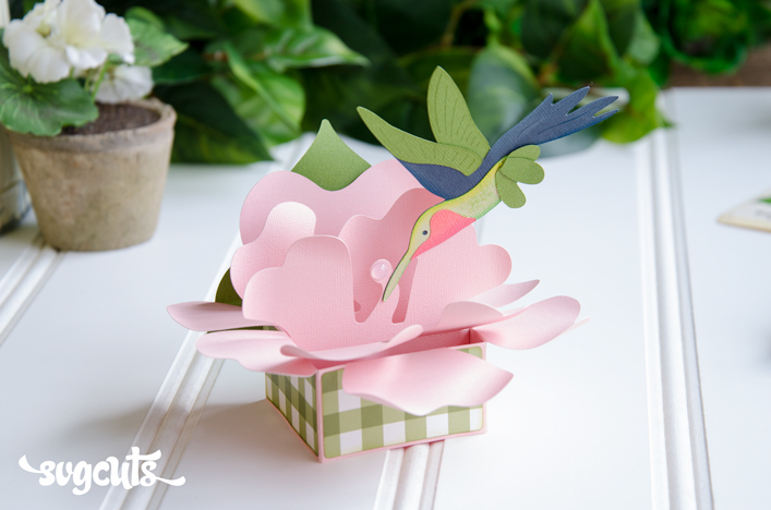 Hummingbird Box Card